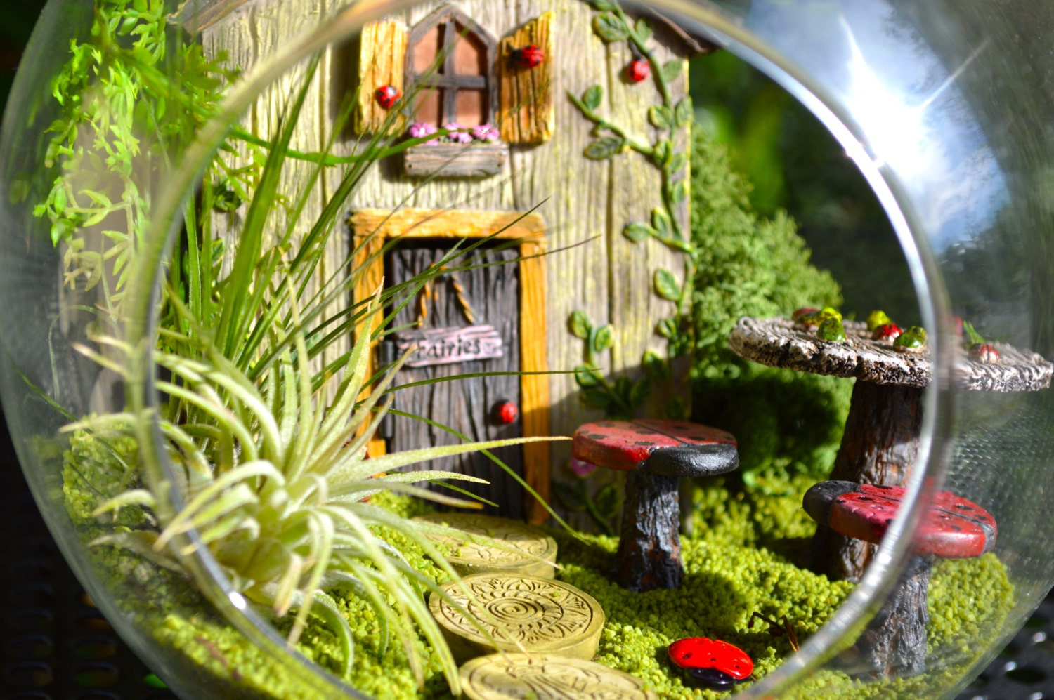 Ladybug garden terrarium kit fairy door opens tic tac for Fairy door kits canada