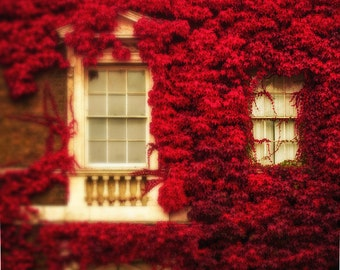 "London print, Ivy on window, Fall photography, London photography - ""London's Autumn Bloom"""