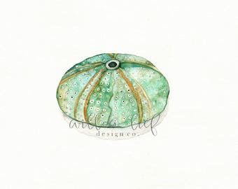 Beach art, beach watercolor, wall art, beach painting, Sea Urchin, watercolor print, ocean life, Archival Print