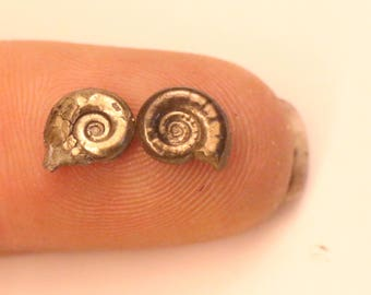 7mm Pair of Eoderoceras iron pyrite ammonite fossils found on the Jurassic coast UK  0027