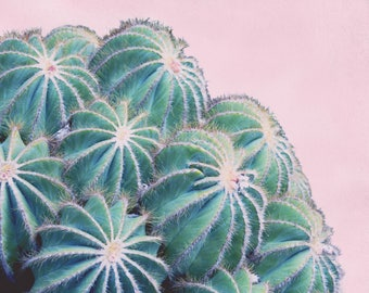 Modern Cactus Art Print, Palm Springs Photography, California Wall Art, Succulent Picture, Green and Pink Decor, Botanical Photograph