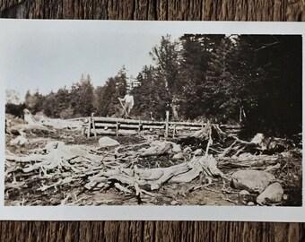 Original Vintage Photograph Natural Destruction