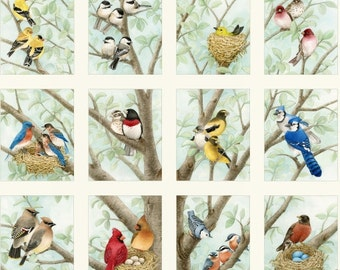 Beautiful Birds by Tracy Lizotte for Elizabeth's Studio