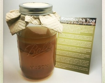 Kombucha Scoby - Live Probiotic Culture for Homebrew Kombucha Tea (Fed Organic and Non-GMO Sugar & Tea) with Starter, Instructions Available