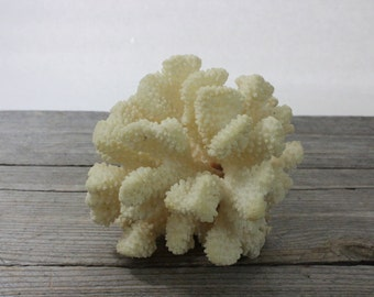 A beautiful piece of natural white, cream colored coral, sea coral cluster