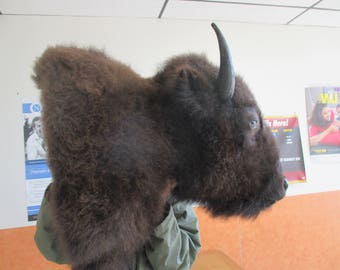 Large American Buffalo Bison Shoulder Mount Taxidermy Hunter ManCave Cabin Decor