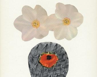 Flower & Cactus Collage