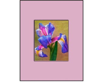 Fine art print with Mat all in one. The Iris, Mounted and ready to hang or frame, 11 by 14. Plus fast and free shipping