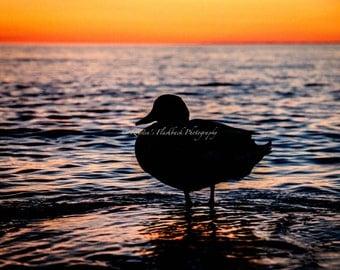 Duck in the Sunset Lake Michigan Photo