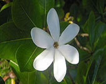 Monoi Tahiti Deep Condtioner