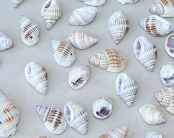 Natural Spiral Sea Shell - Spiral Shell Bead  -  Seashell - 15mm - 30mm  - 25 Shells - 007-70
