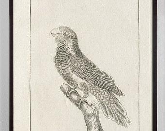 Black and White Bird Art, Black and White Bird Print, Antique Bird Print, Bird Art, Audubon Art, Gift for Bird Lover, Black and White Art