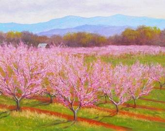 Peach trees in Virginia