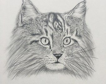 Long-haired cat original drawing