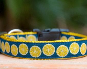 Lemon Dog Collar / Dog Collars Australia / XS-XL