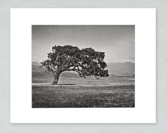 California Oak Tree, Landscape Wall Art, Rustic Wall Decor Picture, 8x10 Matted Print, 'Windswept (Black and White)'