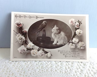 Beautiful Vintage Postcard Posted 'To Wish You A Happy Birthday' with a Kitten and Parrot