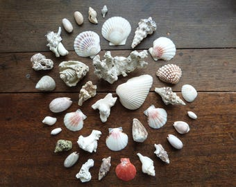 Antique / Vintage Ethical Sea Shell Collection - Large