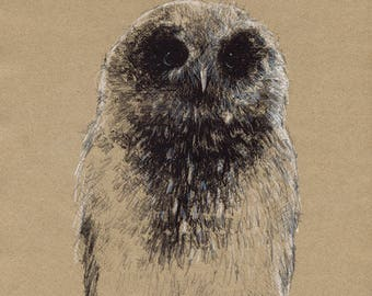Young owlet | Limited edition fine art print from original drawing. Free shipping.