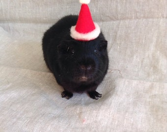 Santa Claus Hat for Guinea Pigs