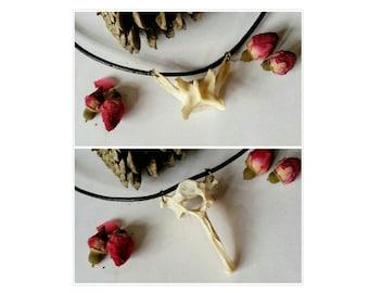 Real fox animal bone jewellery vertebrae spine black leather statement necklaces Taxidermy Oddities