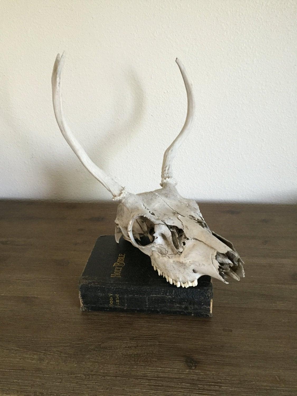 Real animal skull deer skull animal home decor rustic for Skull home decor