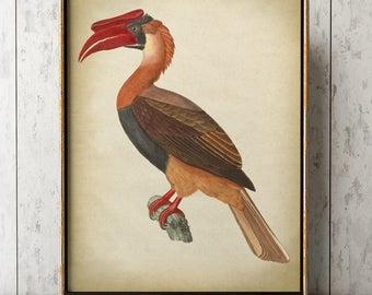 Great Hornbill BIRD Print, Bird Poster, Hornbill Print, Exotic Bird print, Bird Illustration, Home Decor, Wall Art, Bird Art.