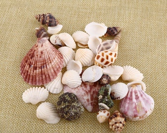 100g Beach SeaShells Mix Sea Shells Shell Craft SeaShell Aquarium Nautical Decor