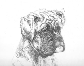 Custom portrait/gift Serious Boxer, pencil drawing