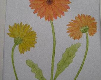 Orange and Yellow Gerbera Flowers.