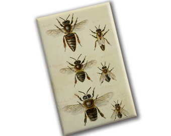 Antique Bee Print Magnet | Honey Bees | Entomology Print | Gift for Queen Bee | Gift for Best Mom | Insect Nature Print