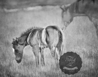 Spring Foal Equine Horse  Rustic Western Farmhouse Fine Art Canvas