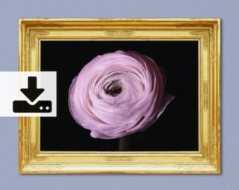 Pink Ranunculus Druck, Minimalist, Wall Art, Printables, Digital download, Ranunculus, Flower, Wanddekoration, Photography, A4, 300 dpi