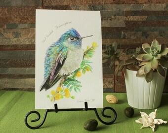 Violet- Headed Hummingbird (Giclee print)