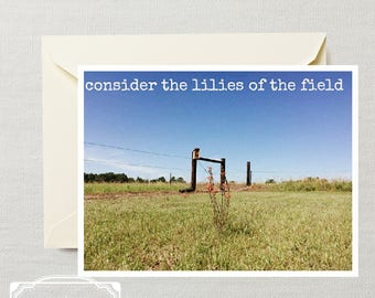 Cards - Consider the Lilies (pkg of 10)