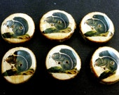 """6 Vintage Image Squirrel Wooden Branch Buttons. Wooden Natural Birch  Branch Decorative Sewing Buttons.  7/8"""" or 23 mm Round."""