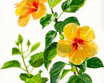 Yellow Hibiscus Flowers, Bright Yellow Blossoms, Original Watercolor Painting Tropical Floral
