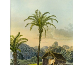 Island Print Palm Tree, Tropical Palm Print Book Plate SALE Buy 3, get 1 Free