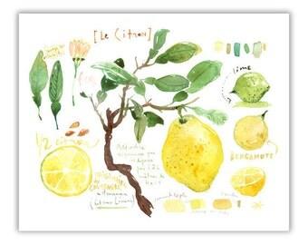 Lemon print, Kitchen art, Lemon tree watercolor painting, Botanical poster, Fruit print, Yellow kitchen decor, Home decor, Lime, Citrus art