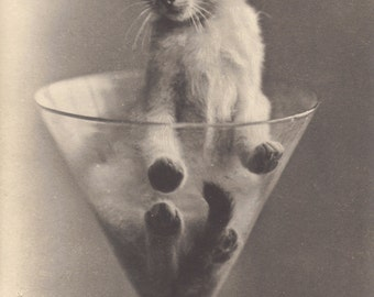 Kitten in Funnel2. French Postcard by Reutlinger of Paris, circa 1900