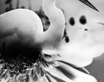Dyptich Photo, Bird Art, Wildlife Photo, nature photography, Egret Photo - fine art photograph