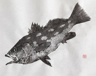 CALICO Kelp BASS Original Gyotaku - traditional Japanese fish art (3)