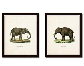 Elephants Print Set No. 5, Natural History Art, Art Print, Collage, Art, Giclee, Print, Elephant Print, Wall Art, Nature Art, Illustration