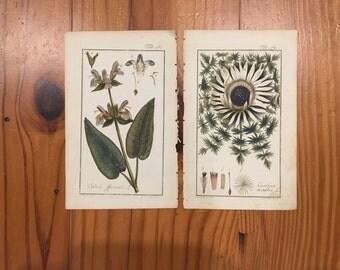 1790 Original JOHANNES ZORN German Botanical Prints--Common Sage & Carline Thistle
