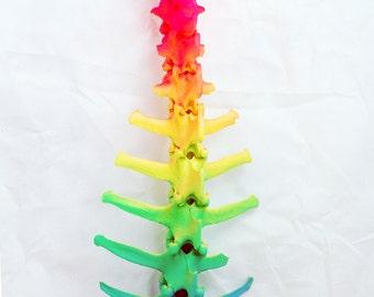 Neon rainbow Roe Deer Spine