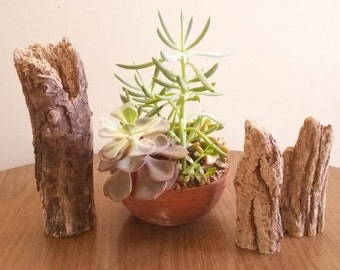 California driftwood set