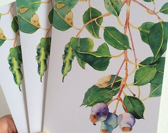 Pack of 3 cards: gum tree with gumnuts - Australian native plant - A6 folded note cards with envelopes for snail mail - botanical card