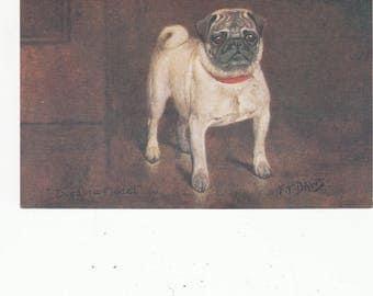 Champion Pug Dog Poses Great Britain Series For Spratt's Dog Food Unused Fine Old Antique Postcard
