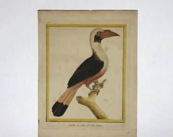 "18th Century Francois-Nicolas Martinet Hand Colored Hornbill Bird Print ""Femelle du Calao, de L'Isle Panay"""
