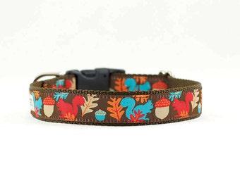 "Fall Squirrel Dog Collar, Fall Dog Collar, Acorn Dog Collar, Woodland Dog Collar, Buckle Collar, Martingale, 1"" Wide"